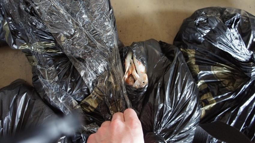 На границе России и Абхазии задержали нелегальную партию барабули