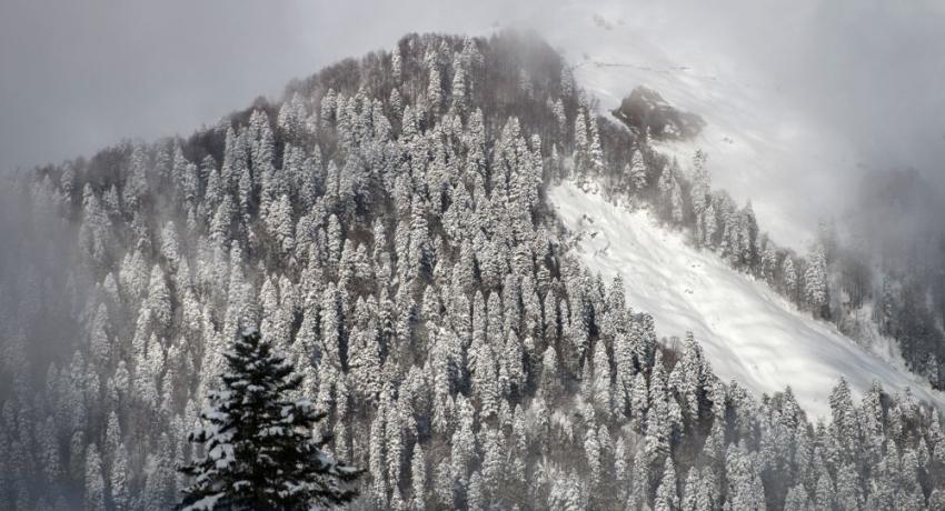 Снегопады, ливни, сход селей: штормовое предупреждение объявлено в Сочи