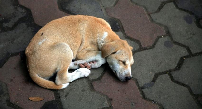 Смертельная инициатива: в Гагре произошло массовое истребление бродячих собак