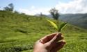 «Я никогда не был безразличен к судьбе отечественного чая»: интервью с создателем марки «АПСУА ЧАЙ»